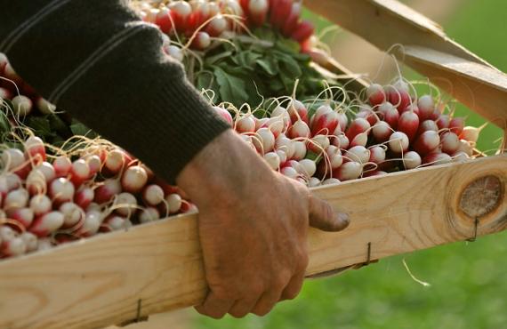 tijdelijke steunmaatregelen groenten en fruit
